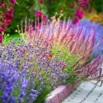 Brightly colored flower garden