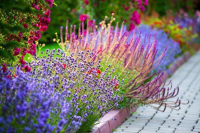 Brightly colored flower garden